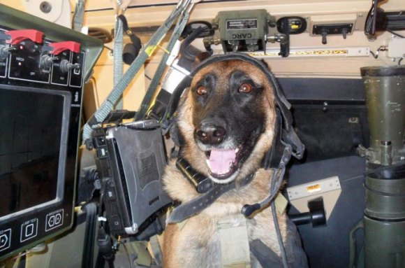 Veterans Day for Dogs?
